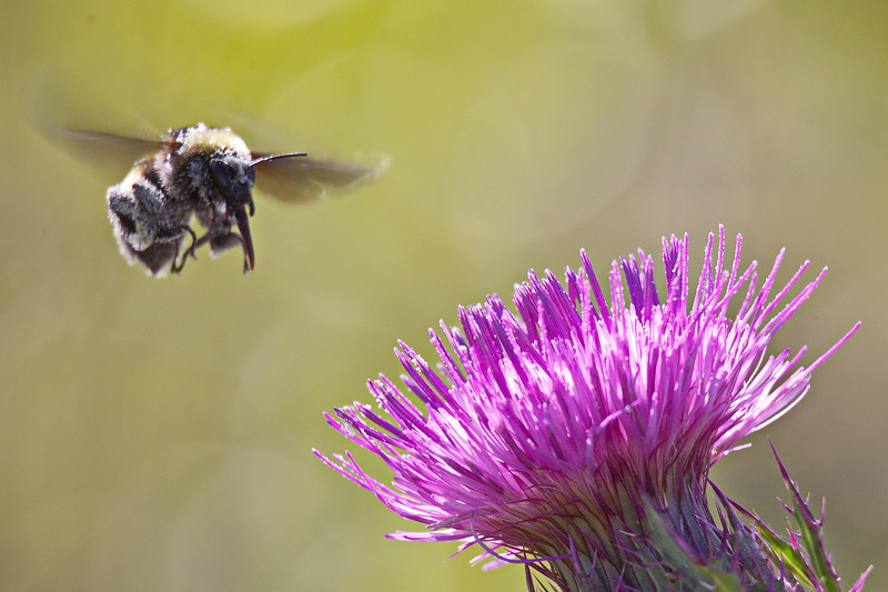Bumblebee (Navy Fighter Jet) about to Land on Horrible Thistle (Aircraft Carrier).