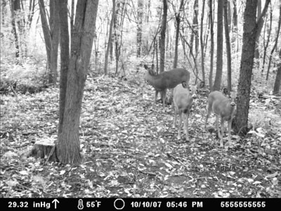 Moultrie I-60 Trail Camera