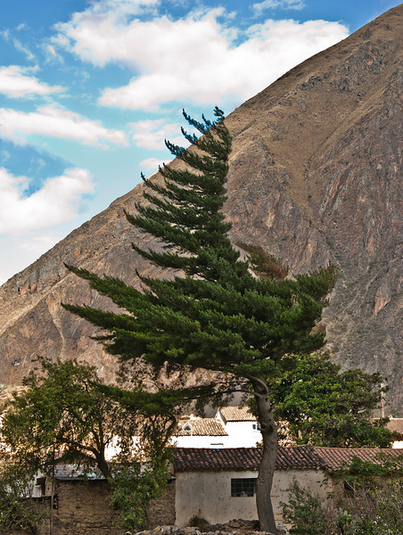Day 2 Cusco - The Sacred Valley of the Incas - Archaeological site of Ollantaytambo - tree shaped by wind