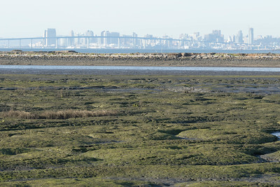 Looking up the bay to the Coronado Bridge and downtown San Diego from the Salt Works outer levee.  Foreground is low tide on the south end of the bay.