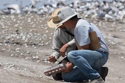 Refuge manager and bioligist for site, examine an Elegant Tern egg