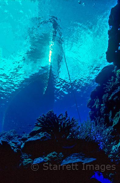 80 feet,  Great Barrier Reef