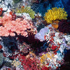 Soft corals, sponges and crinoids