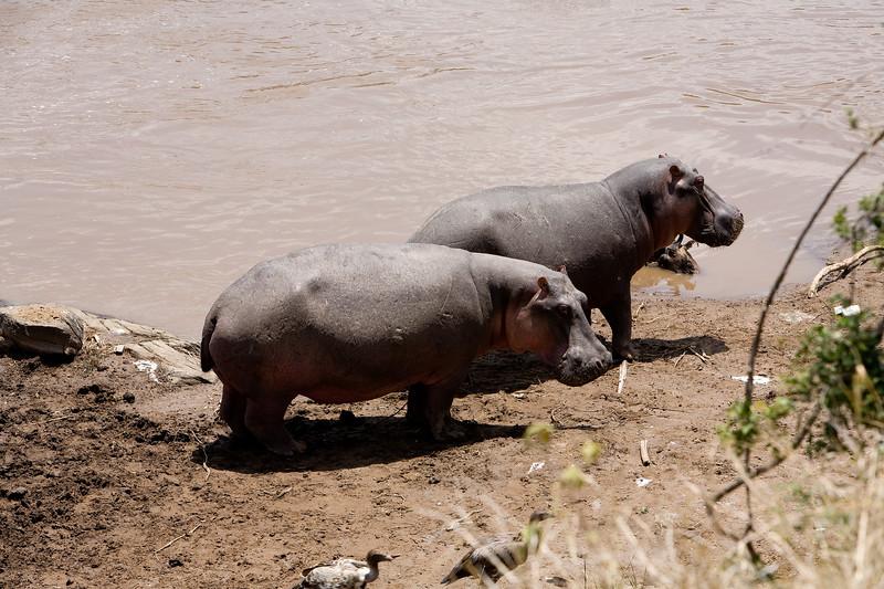 20100911_Maasi Mara_513