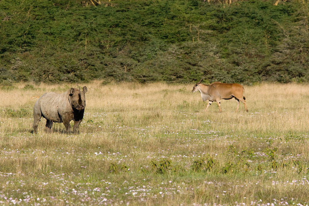 20100907_Lake Nakuru_266