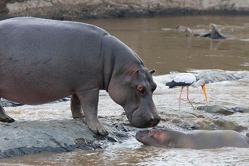 2007 07 26 Masai Mara 021
