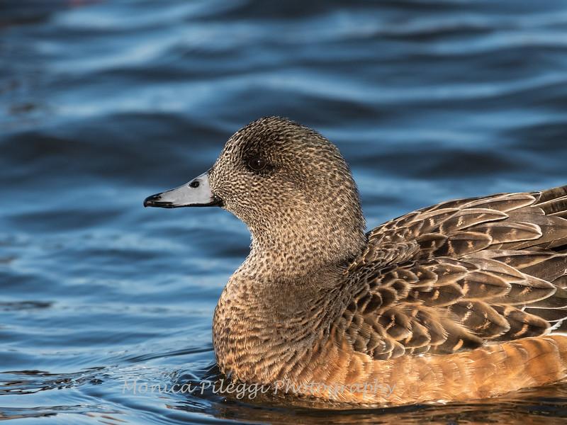 Ducks 6 January 2019-6394