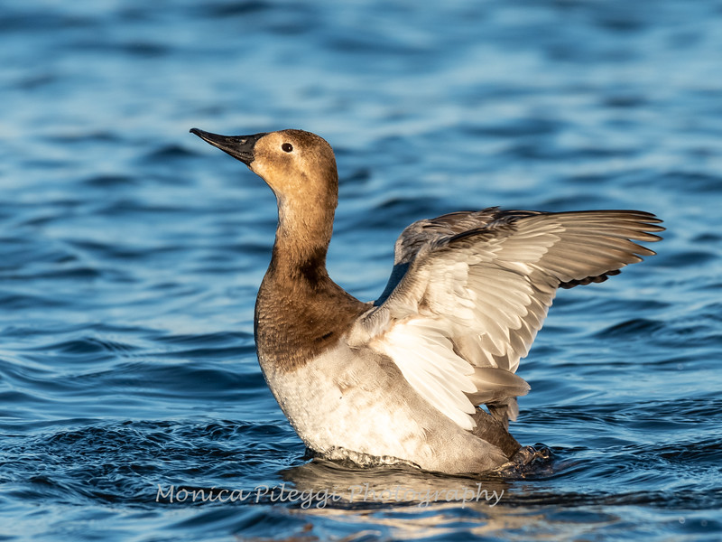 Ducks 6 January 2019-6818