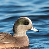 Ducks 6 January 2019-6515