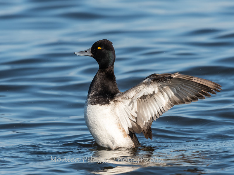 Ducks 6 January 2019-6243