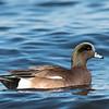 Ducks 6 January 2019-6536
