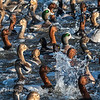 Waterfowl Choptank River 29 Dec 2018-5163