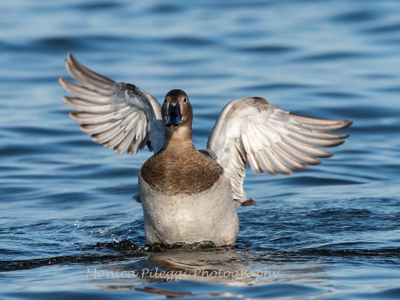 Ducks 6 January 2019-6358