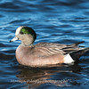 Waterfowl Choptank River 29 Dec 2018-5083