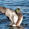 Ducks 6 January 2019-6391
