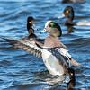 Ducks 6 January 2019-6442