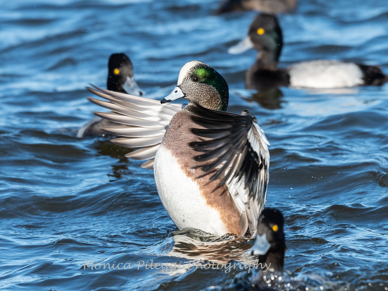 Ducks 6 January 2019-6441