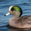 Ducks 6 January 2019-6141