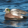 Waterfowl Choptank River 29 Dec 2018-5052