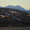 Sunset Flight at Bosque