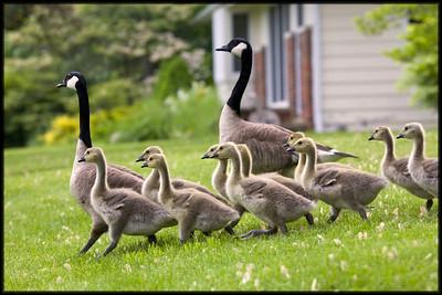 Field Trip Children!