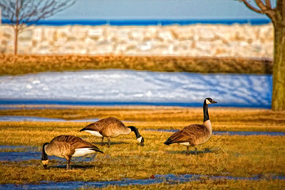 Painted Geese