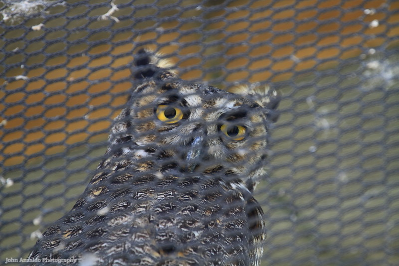 Ohlone Humane Society Wildlife Rehabilitation Center