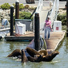 They had to use a hose to get the sea lions off the dock where we got on/off the boat. They look big here, but were tiny next to the whales!
