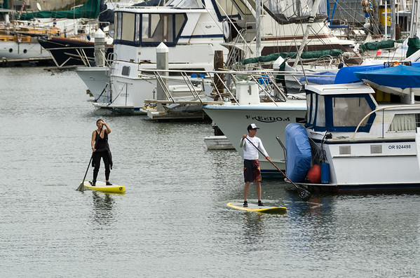 Stand up paddleboarders heading back into the harbor