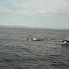 Orca Vancouver Island