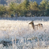 Frosted Wildscape