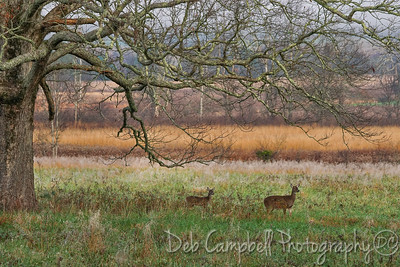 Doe and Fawn under the Tree