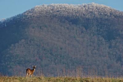 Little Doe-Big Mountain