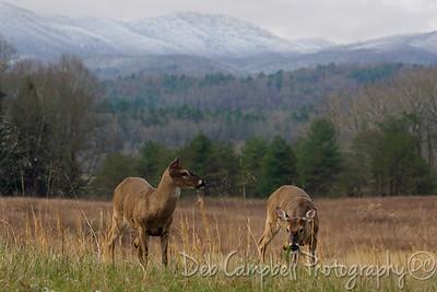 Bucks no antlers