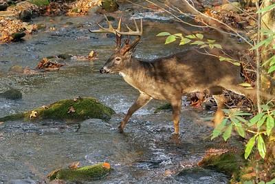 Lucky crossing Rowan Creek