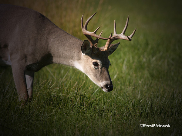 OV 08SP6567  5x5 Buck.