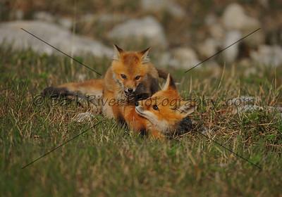 05 17 10 Fox516 e