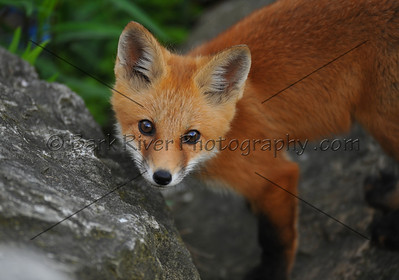 05 17 10 Fox761 e