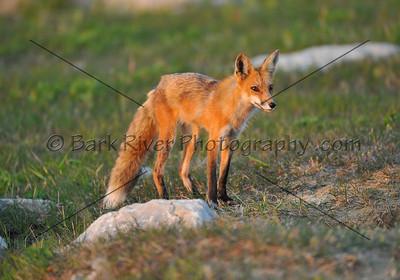 05 19 10 Fox252 e