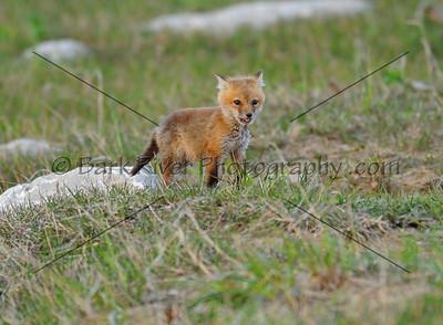05 08 10 Fox613 e