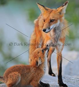 05 22 10 Fox184 e