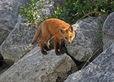 05 17 10 Fox685 e
