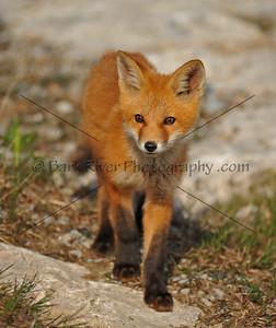 05 17 10 Fox645 e
