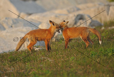 05 22 10 Fox104 e