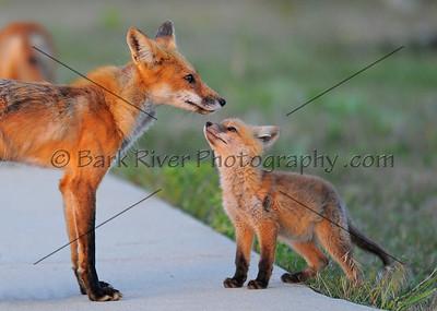 05 19 10 Fox280 e