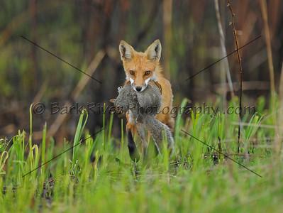 04 30 10 Fox002e