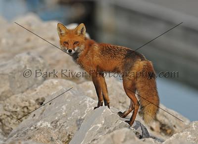 05 17 10 Fox381 e