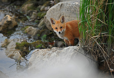 05 17 10 Fox683 e