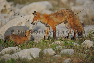 05 17 10 Fox218 e