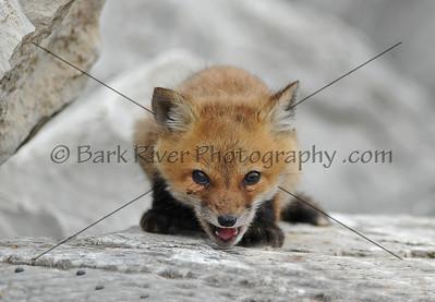 04 30 10 Fox133 e
